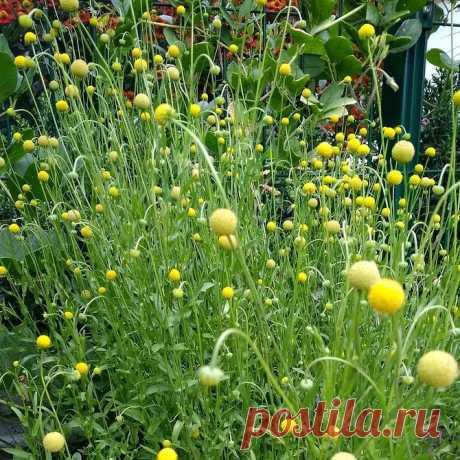 9 необычных растений для вашего участка, которые НЕ РАСТУТ У СОСЕДЕЙ   6 соток