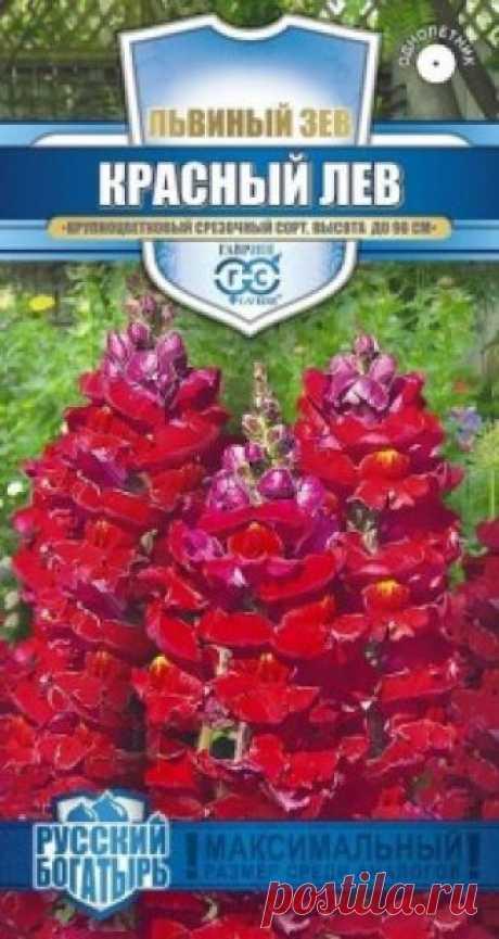 """Семена. Львиный зев """"Красный лев"""" (вес: 0,1 г) Всхожесть: 82%. Великолепный крупноцветковый срезочный сорт. Декоративное растение из семейства Норичниковые, культивируемое как однолетник, высотой 70-90 см. Цветет с конца июня до поздних заморозков. Цветки собраны в кистевидные соцветия темно-красной окраски. Холодостоек, светолюбив, к..."""