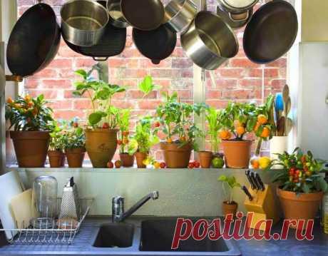 Далеко не каждый садовод может похвастаться большим участком для выращивания огородных культур. Кроме того, нехватка времени, сил приводит к тому, что большинство дачников отказываются от тяжелых садовых работ. Но при желании наслаждаться вкусными и полезными овощами, можно заняться их выращиванием в контейнерах. Такой процесс менее трудоемкий, при этом позволяет достичь хорошего урожая...