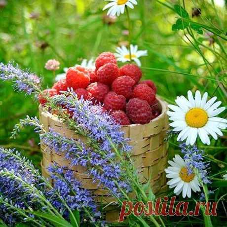...Счастье надо пить свежим – его нельзя откладывать!...А неприятности могут и подождать!