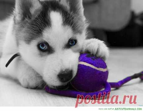 Pretty Puppy | To Die For
