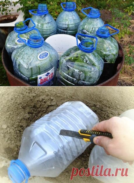 Огурцы в бутылках — удобно и выгодно.