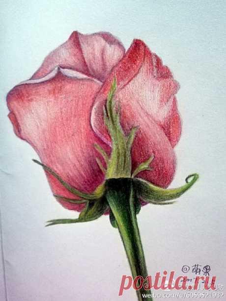 Роза цветными карандашами — DIYIdeas