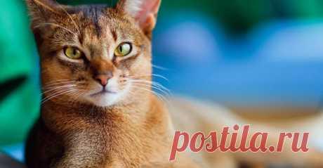 Держат язык за зубами: 5 пород кошек для интровертов | sm-news.ru