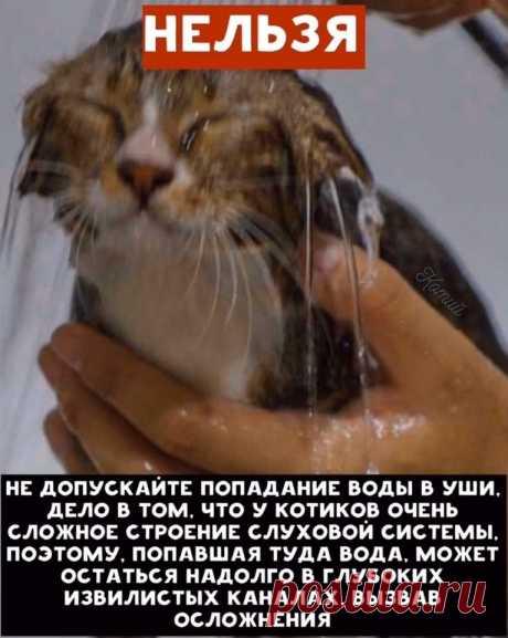 Если берете кота в дом, то относитесь к нему ответственно, как к члену семьи! Иначе - не берите.