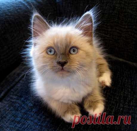 Подборка котиков-антидепрессантов