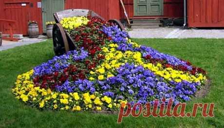 15 цветочных культур, которые нужно посеять на рассаду в марте -