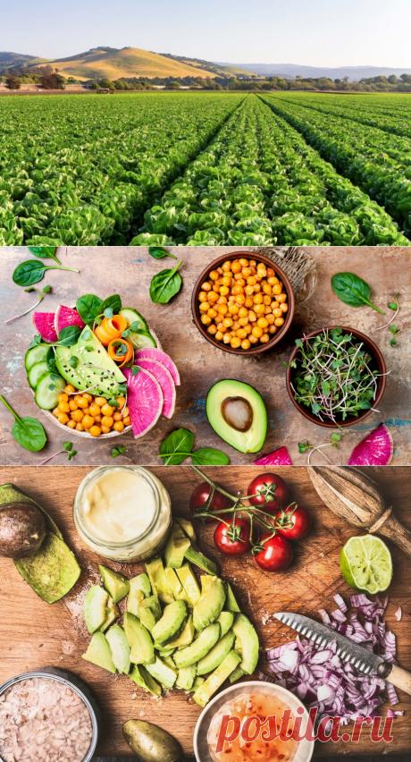 Вегетарианская диета самая экологичная для планеты - Экологический дайджест FacePla.net