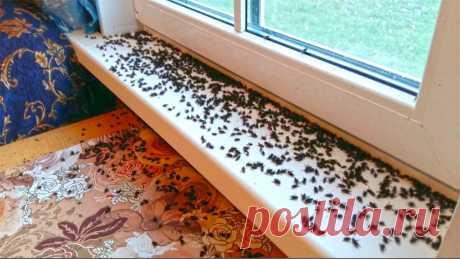 Я навсегда забыла, что такое мухи, комары и мошкара в доме. Несложный трюк, который поможет избавиться от них раз и навсегда   Елена Матвеева   Яндекс Дзен