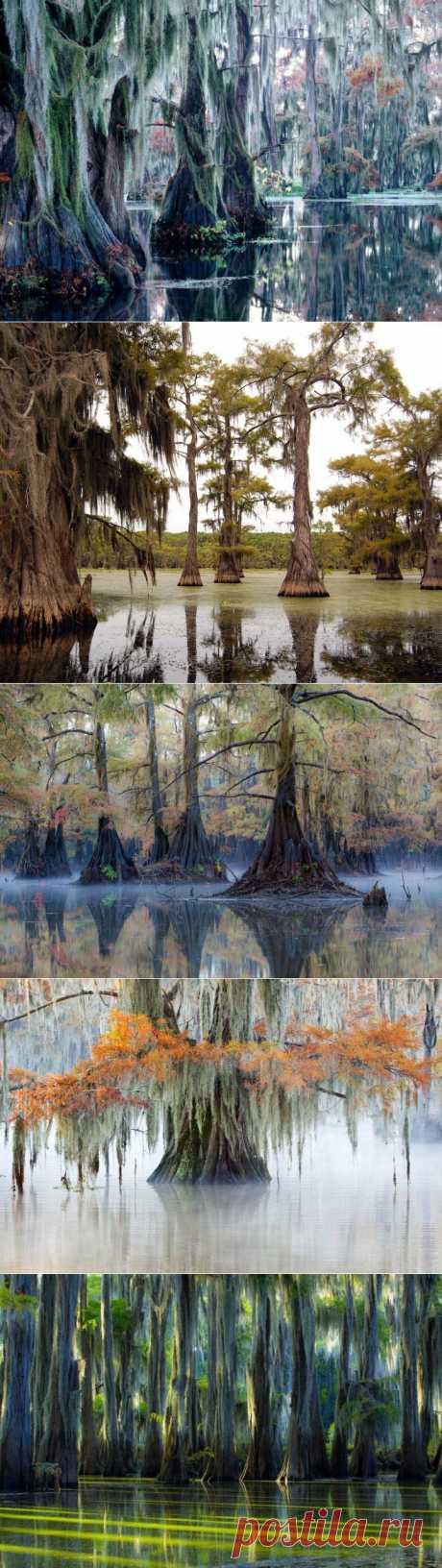 (+1) тема - Удивительное озеро сказочных кипарисов! | НАУКА И ЖИЗНЬ