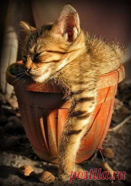 Adorable cute cat sleeping in a vase.