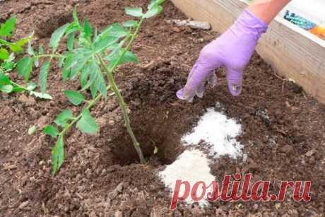 Внесение удобрений при посадке томатов в грунт и теплицу,  особенности подкормки.