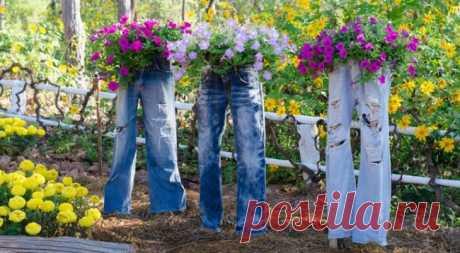 Варианты использования петунии в саду: учимся составлять клумбу с бархатцами и использовать различные вазоны