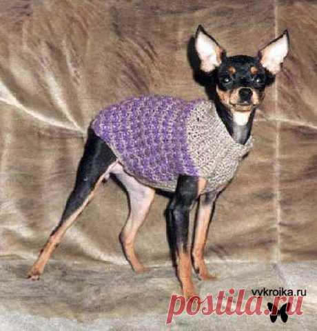 Сайт о маленьких собаках - Вязаные свитера. Часть 1