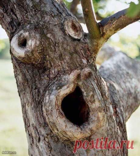 Крик дерева.