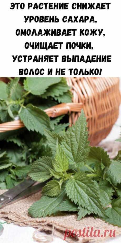 Это растение снижает уровень сахара, омолаживает кожу, очищает почки, устраняет выпадение волос и не только! - Стильные советы