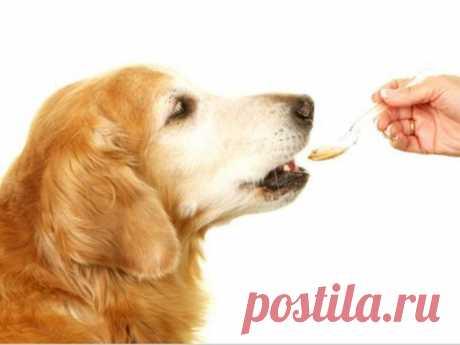 Признаки авитаминоза у собак: 10 основных проявлений заболевания, причины и способы лечения