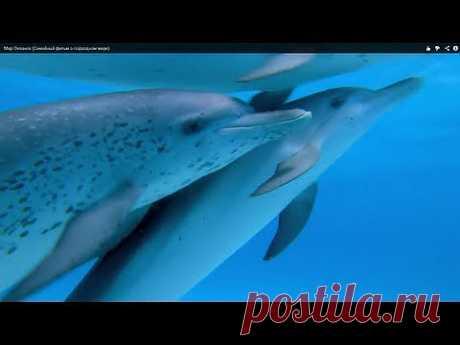 Мир Океанов (Семейный фильм о подводном мире) - YouTube