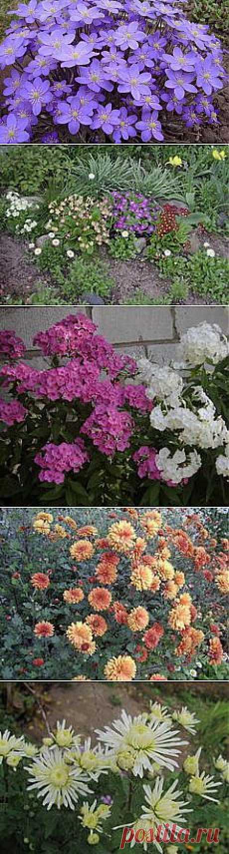 Какие многолетники подобрать для цветника? | Растения