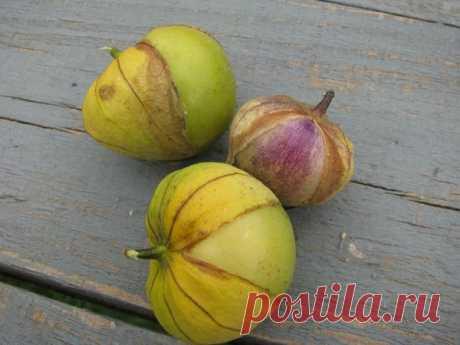 Физалис овощной: рецепт вкусного варенья