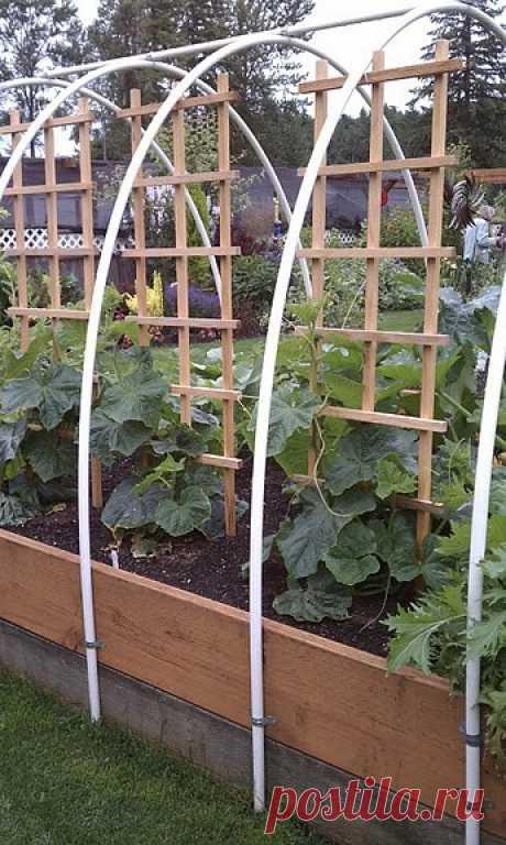 La plantación de las plantas en el korob-invernadero hecho por las manos