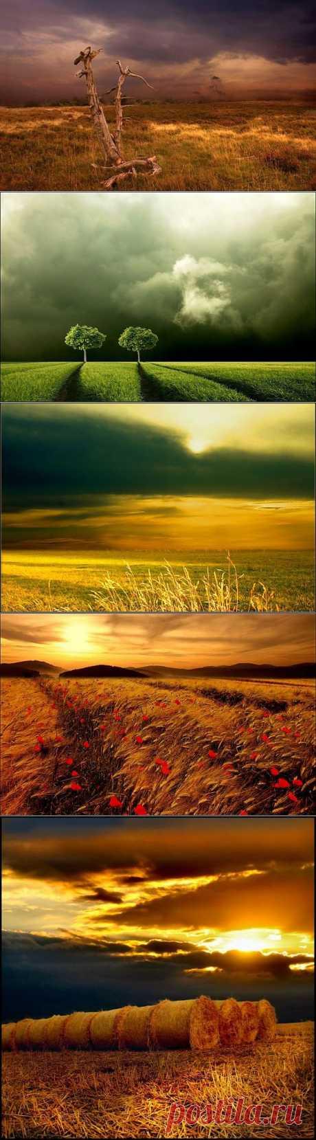 Бескрайние поля от профессиональных фотографов | ЛЮБИМЫЕ ФОТО