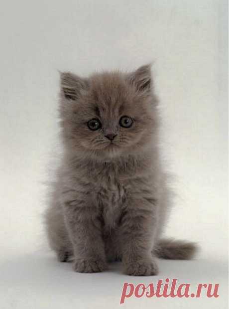 Name That Kitten! - Kittentoob