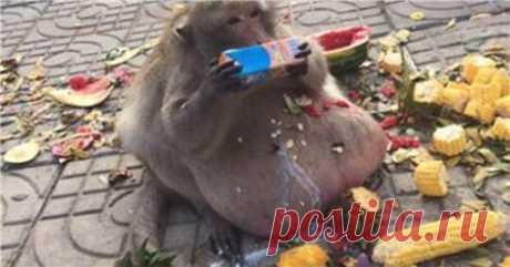 На диету!!! - Интересное и необычное - ГОРНИЦА - дайджест новостей, авторские блоги