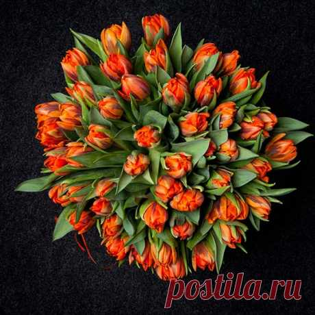 Flowers tulips, bouquets (53 photos) of the picture, video