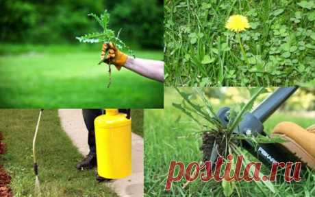 Борьба с сорняками на дачном участке: чем уничтожать, убирать, обработка огорода химией, селитрой