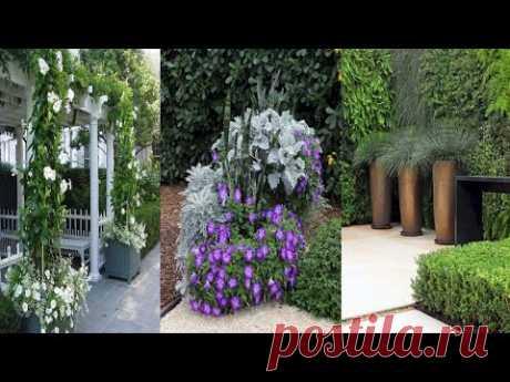 Дизайн двора и сада