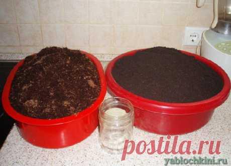 правила выращивания рассады петунии |