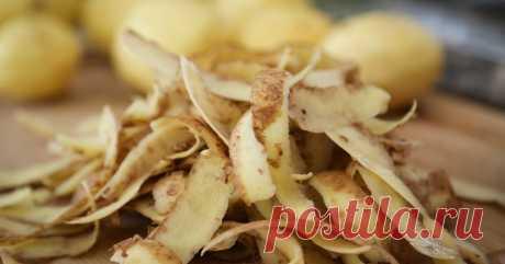 Картофельные очистки: чем полезны и как их использовать на даче Картофельные очистки не так уж и бесполезны, как все привыкли считать. Их можно использовать как удобрение. А еще они помогут в борьбе с насекомыми-вредителями.
