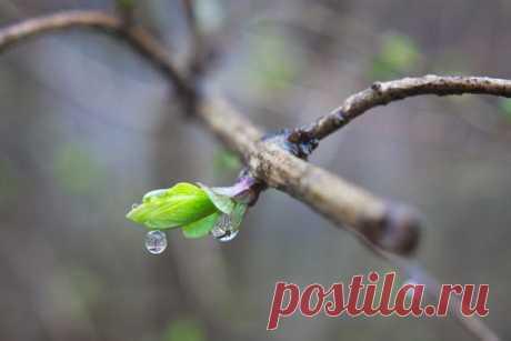 Ожидание весны... Это светлое Природы пробуждение. Это сказочные сны. Просто новое, волшебное рождение..