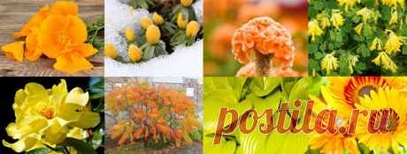 Участок в желто-оранжевых тонах: растения, акценты и особенности   Цветники и клумбы (Огород.ru)