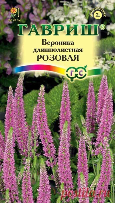"""Вероника длиннолистная """"Розовая"""""""