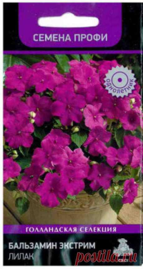 """Семена """"Бальзамин. Экстрим Лилак (Семена. Профи)"""", (10 штук) Яркая окраска цветка! Генетически компактная серия, отличающаяся хорошим ветвлением. Растение прямостоячей формы, густооблиственное. Высота – 15-20 см. Листва – насыщенно-зеленая. Формирует множество крупных цветков пурпурно-лиловой окраски, особенно выигрышно смотрящихся, на фоне зеленой..."""
