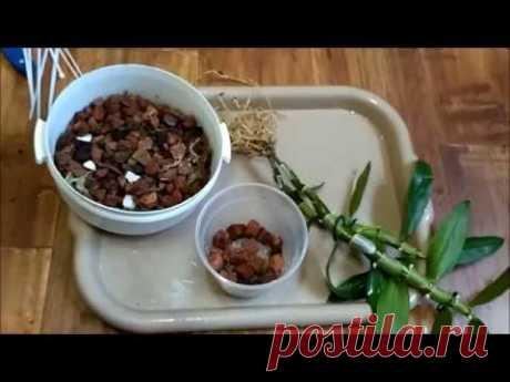 Пересадка орхидеи Дендробиум Нобиле (мои уценки с Епицентра)