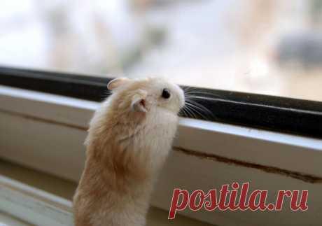 little_baby_hamster