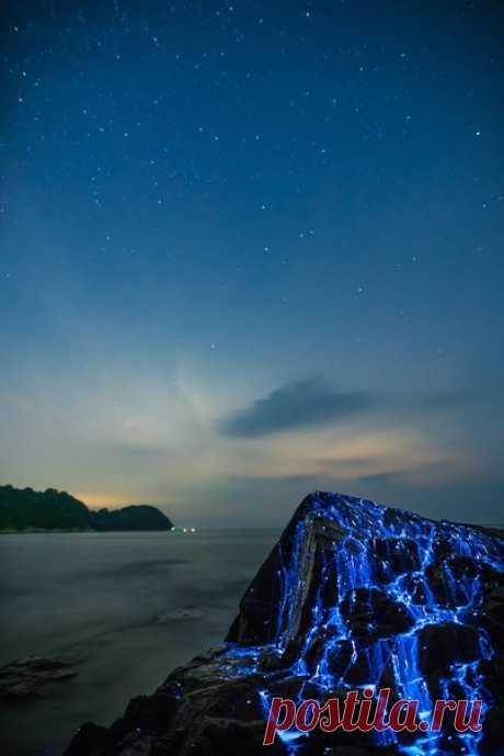 Нереальная красота: светящиеся креветки у берегов Японии