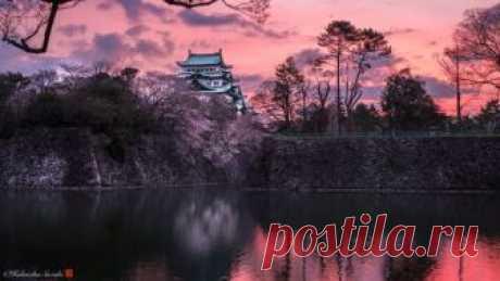 Сакура в цвету… Фотопейзажи из Японии, от которых захватывает дух! | Фотоискусство