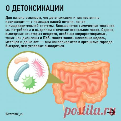 Какие токсины накапливаются в организме и как их выводить