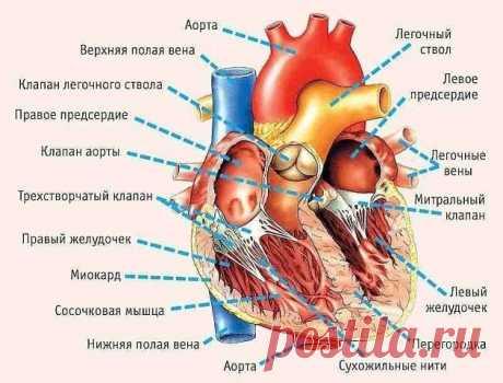 11 симптомов, указывающих на серьезные проблемы с сердцем!  Кардиологи уверяют, что каждый, кто разошлет этот текст 10 людям, может быть уверен: по крайней мере одну жизнь он спас.