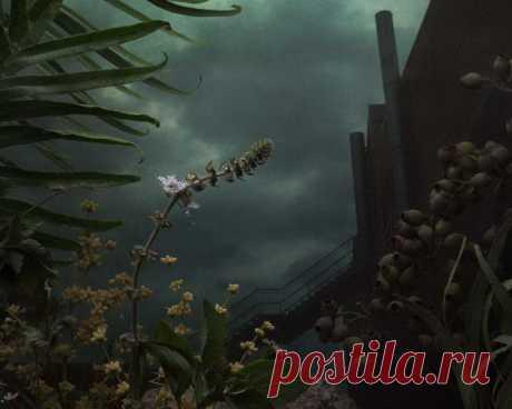 Похожи на картины! Необычные фотографии растений Daniel Shipp (Daniel Shipp) | Фотоискусство