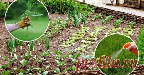 Школа Огорода: Гербициды – что это такое и для чего их применяют? Если на своем участке вы разбили маленький огород, то можно справиться с сорняками при помощи традиционной прополки. А вот владельцам 20-30 соток трудно обойтись без применения гербицидов. Что же это за препараты?