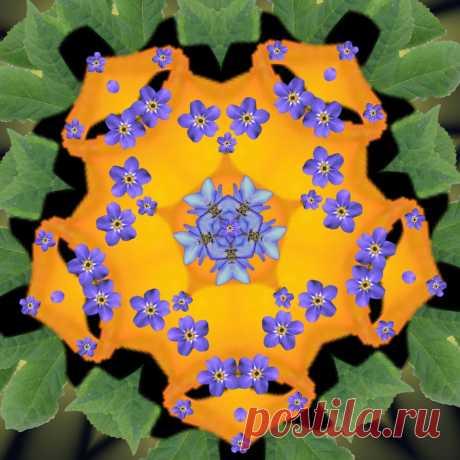 Digital Flower Mandala  Free Stock Photo HD - Public Domain Pictures