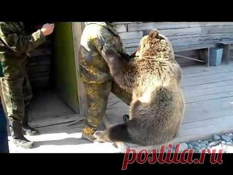 Медведь-сирота