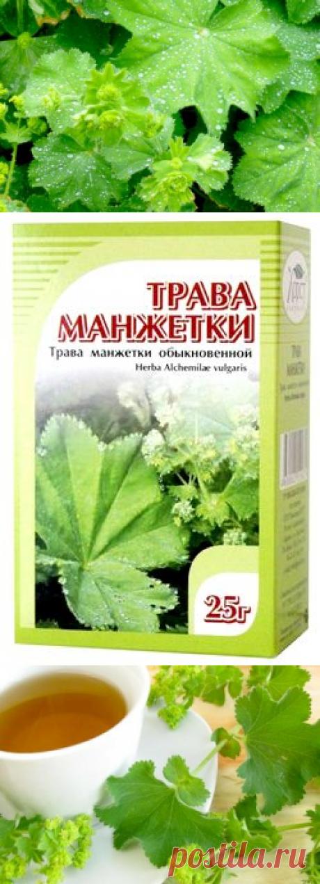 Манжетка (трава) - применение, лечебные свойства и противопоказания