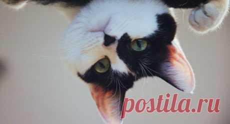 """""""Нормально, нормально"""": кот забавно отвечает моющей его хозяйке – видео"""