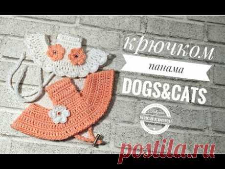 Панама для собак и кошек, вязание крючком